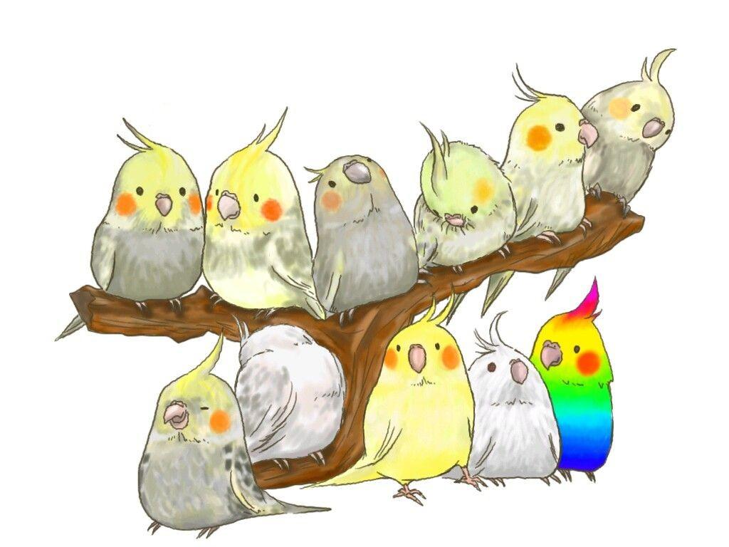 рисунки попугаев смешные площади
